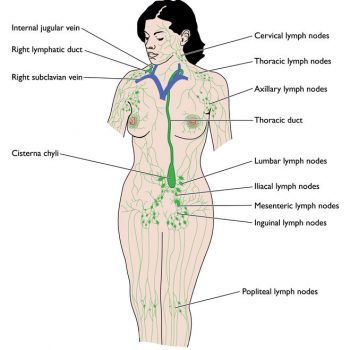 Lymphatic System 2