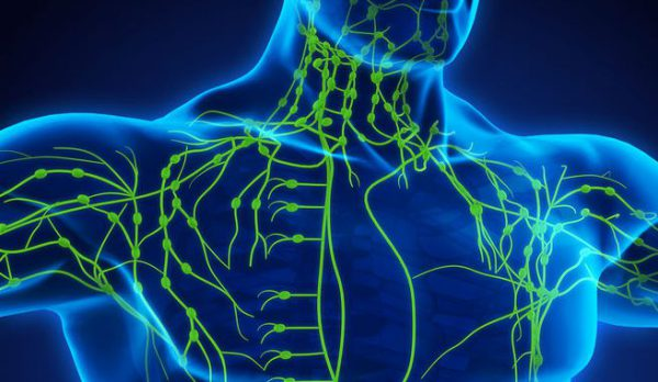 Lymphatic-System-6-aspect-ratio-486-282